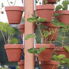 Maak uw eigen hangende tuinen met deze bloempothangers. U kunt er elke soort bloempot mee ophangen. Zowel kunststof potten, stenen potten, met of zonder rand, alles kan er aan. Dus voortaan nog maar één hanger om al uw verschillende potten op te kunnen hangen. Zelfs plantenbakken ophangen kan. Gebruik dan 2 of 3 hangers per bak.