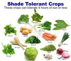 Shade Tolerant Crops