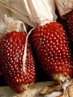 how to grow strawberry popcorn