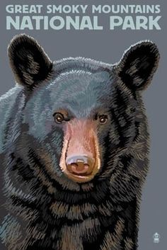 Black Bear Up Close - Great Smoky Mountains National Park, TN - Lantern Press Poster