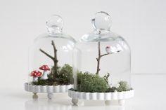 Mini mushroom terrariums