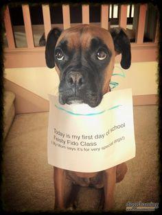 Dog could teach class on sad puppy eyes 101!