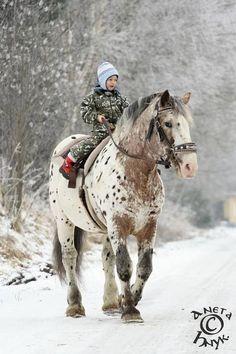 Horse child in snow