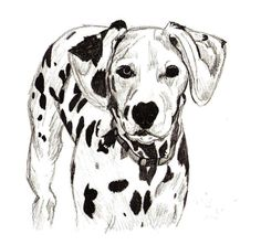 images of drawings of dalmatians | Dalmatian Surface : Drawing, Year : 2008, Size : A4, Certification yes ...