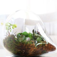 "Created some ""living"" art with these exotic succulents in a homemade terrarium. #thephacelife #fengshui #livingart #happiness #love #beauty #plants #nature #green #peace #zen #art #positiveenergy #flow #succulents #lifestyle #energy #plants #balance #natural #pure #beautiful"