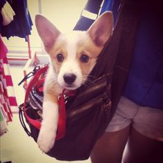 I can see myself carrying a corgi in my purse, too. Is that bad?