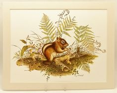 Vintage Chipmunk Print,  Woodland Animal Art, (Matted 11 x 14 Wall Hanging Frames Easily) $11.00, via Etsy.