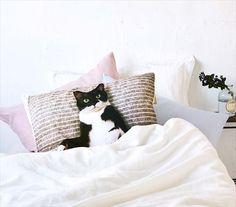 あなたのベッドで猫ちゃんが添い寝待ち 白黒の猫ギズモさんの「まくらカバー」が登場!