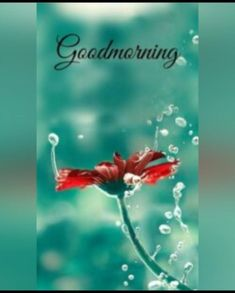 Good Morning Friends Images, Good Morning Sunday Images, Good Morning Photos Download, Good Morning Beautiful Pictures, Good Morning Images Flowers, Good Morning Gif, Good Morning Greetings, Good Morning Wishes, Good Morning Quotes