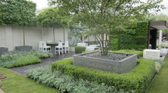 extra large planters become raised beds, boxwood, green and variegated foliage
