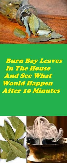 The bay leaf, also known under its scientific name, Laurus nobilis, is a leaf from the bay laurel tree. It is mostly found in the Mediterranean and has been used as a natural remedy. Burning Bay Leaves, Bay Laurel Tree, Health And Wellness, Health Tips, Holistic Wellness, Wellness Tips, Health Benefits, Laurus Nobilis, Womens Health Care
