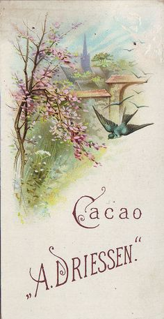 cacao driessen swallows flowering trees