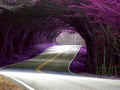 Highway 1, California. Beautiful