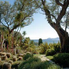 Cactus Garden at Antibes