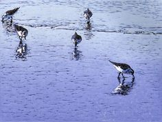 Five Pipers, linocut print by William Hays