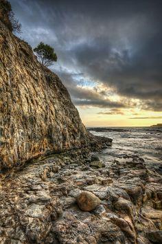 ~~Easter Tree   Abalone Cove, Rancho Palos Verdes, California by Neil Kremer~~