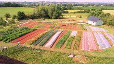 Huntstile Organic Kitchen Garden, Somerset. WOW! http://www.organicholidays.co.uk/at/2112.htm