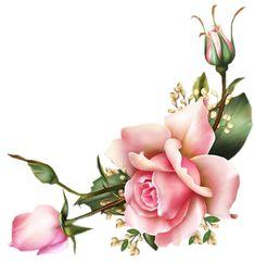 Flower Images, Flower Photos, Flower Frame, Flower Art, Rose Flower Wallpaper, Image Hd, Beautiful Flowers Wallpapers, Christmas Swags, Flower Clipart