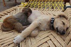 #dogs #monkey