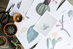 Drawings of different kinds of cactus. Get this image for free at www.rawpixel.com