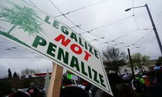 Ohio, Oregon, California, Wyoming, Maine: The Latest in Cannabis Legalization Initiatives