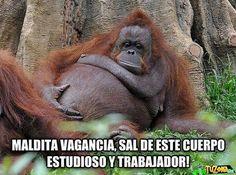 imágenes de Monos Graciosos