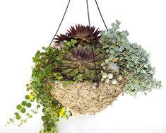 Succulent Hanging Basket  GOOD SITE FOR SUCCULENTS