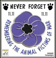 Image result for Blue poppy remembering the animals caught in conflict images