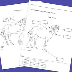 Horse anatomy cut and paste freebie.