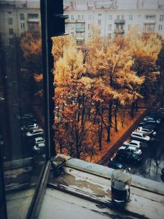 Autumn trees in the city