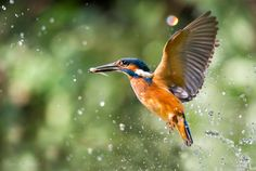 Let's fly away by Max Rinaldi on 500px