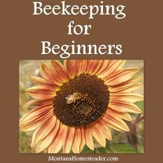 Beekeeping for Beginners - Montana Homesteader