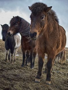 Wet Horses by shootingthedog, via Flickr