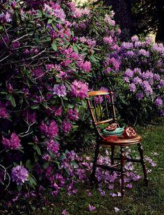 Camilla Krishnaswamy - Rhododendron_2533.jpg