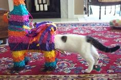 This cat getting a little too personal with this piñata. | 32 Cats Who Are Way Too Curious For Their Own Good
