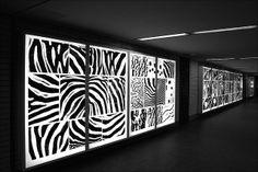 Zebra Leuchtkasten