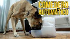 Como hacer un comedero automatico para perros