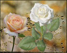 GIFS HERMOSOS: HERMOSAS ENCONTRADASA EN LA WEB Beautiful Roses, Flowers, Plants, Gifs, Butterfly Wings, Flower Arrangements, Nature, Butterflies, Nighty Night