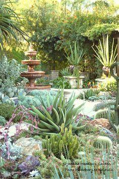 Jeanne Meadow's garden - Makes me think of some of our California Missions' grounds.