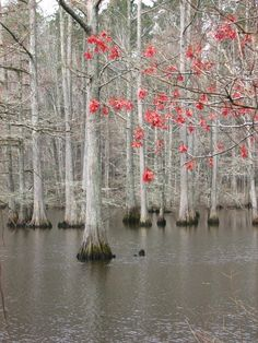 Sky Lake Is One Of The Best Natural Wonders In Mississippi Bald Cypress Tree, Cypress Trees, Giant Tree, Different Seasons, Natural Wonders, Small Towns, Science Nature, Mississippi, Natural Beauty