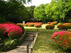 Meiji Shrine Gardens - Tokyo
