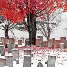 <3 <3 <3 cemetery in october snow. taken in vermont by jim thompson