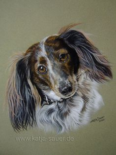 Hundezeichnungen und Hundeportraits in Pastellkreide - Tierzeichnungen und Tierportraits von Katja Sauer / Dog paintings and dog portraits in soft pastels - Animal painting and animal portraits by Katja Sauer