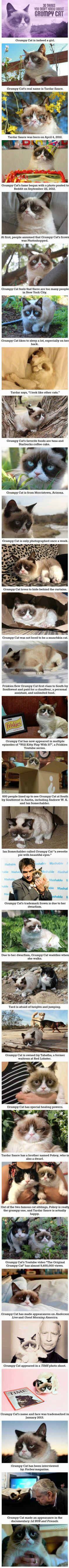 30 Things You Didnt Know About Grumpy Cat SHE HAS MY BIRTHDAY!!