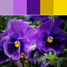 《Purple and Yellow Palette》
