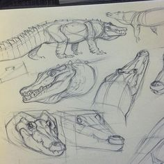 Some croc studies before bed Animal Sketches, Animal Drawings, Cool Drawings, Drawing Sketches, Drawing Animals, Drawing Ideas, Sketching, Figure Drawing, Drawing Reference