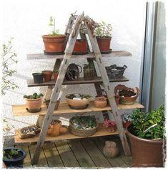 Flower ladder, old ladder - now I finally have one! - My beautiful garden forum - A ladder becomes a plant shelf for the - Container Gardening, Gardening Tips, Garden Forum, Design Jardin, Diy Garden Furniture, Décor Boho, Plant Shelves, Balcony Garden, Garden Ladder