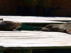 Resting friends