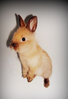 Bunny hop. adorable