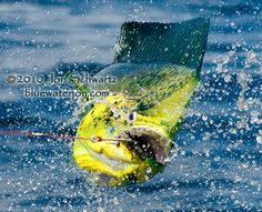 Jon Schwartz's Blog: Fishing, Big Fish Photography, and Travel ...